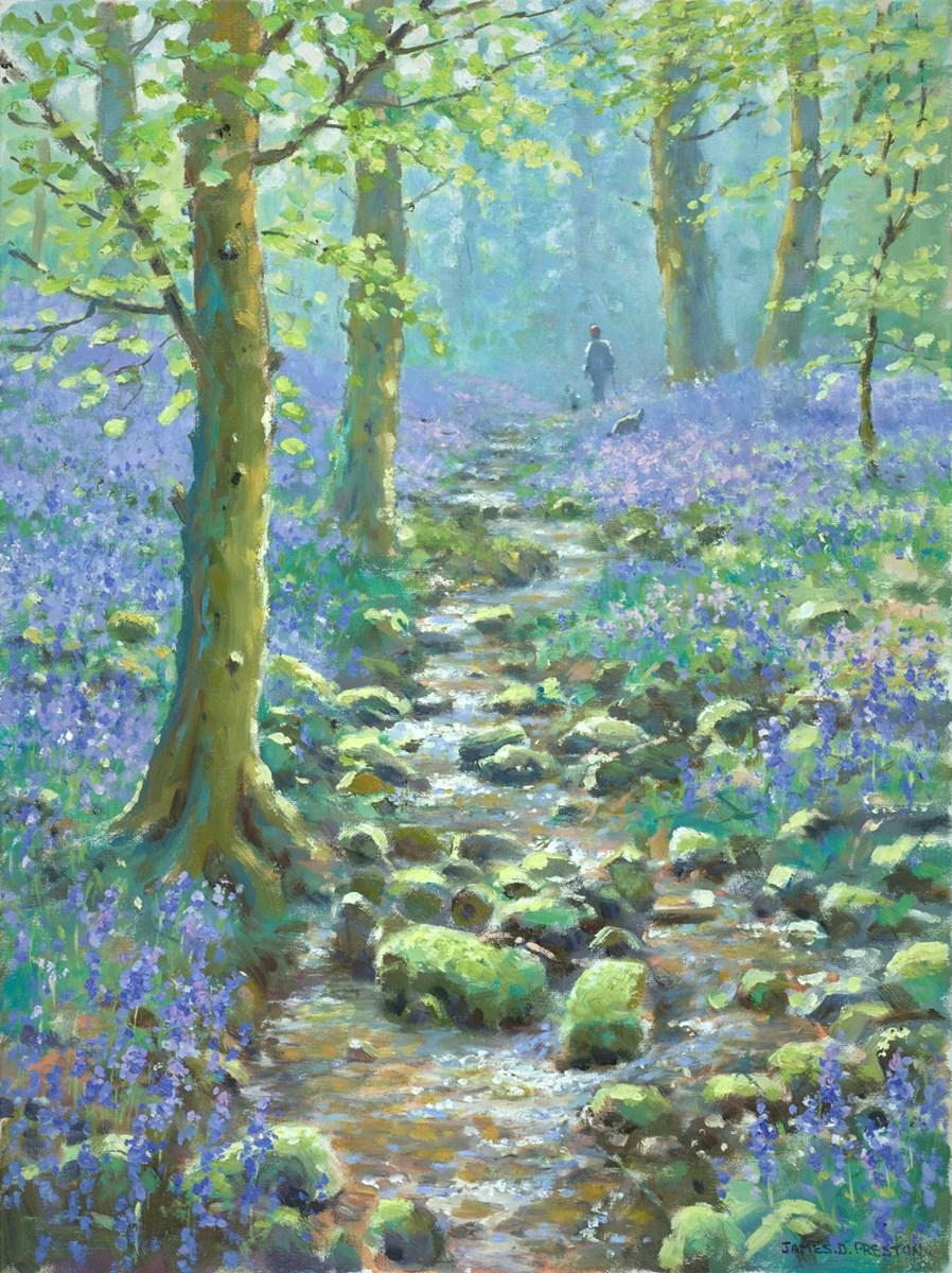 Pathway Through the Bluebells